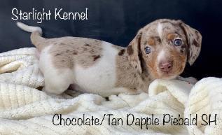 Starlight Kennel